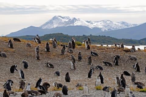 Déserts glacés de l'extrême sud en argentine