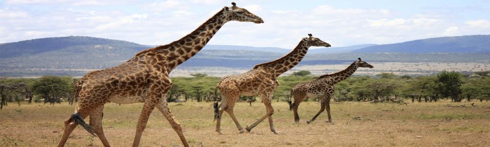 lih-reserve-de-masai-mara